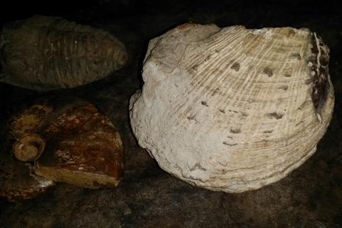 my-fossils_20170627-brachiopod-01
