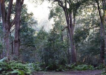 Vic-Trip_Combienbar-River-3-campsite_DSC_0828