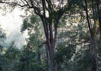 Vic-Trip_Combienbar-River-3-campsite_DSC_0829