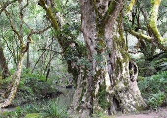 Vic-Trip_Combienbar-River-4-campsite_DSC_0564