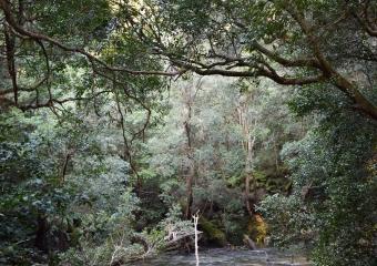Vic-Trip_Combienbar-River_DSC_0824