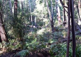Vic-Trip_forest_DSC_0251