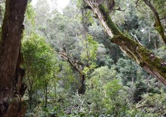 Vic-Trip_forest_DSC_0562