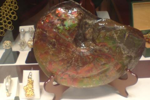 my-fossils-ammonite-2008-Ketchikan-Alaska_DSC00290