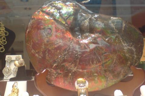 my-fossils-ammonite-2008-Ketchikan-Alaska_DSC00291