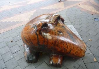 2011-Tasmania-thomson-the-doge_P1000872