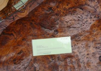 2011-Tasmania-wood-carvers_P1000880