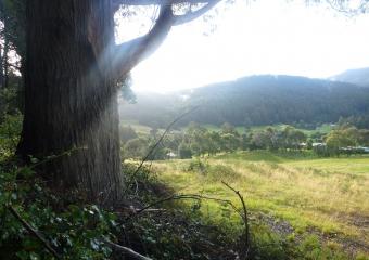 2011-Tasmania-z_misc_P1000848