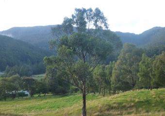 2011-Tasmania-z_misc_P1000858