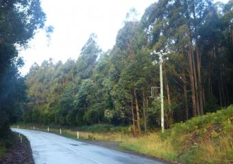 2011-Tasmania-z_misc_P1000861