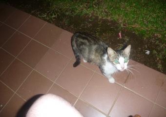 PNG_P1020375-cat