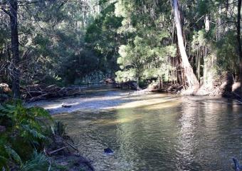 Vic-Trip_Cann-River_DSC_0253