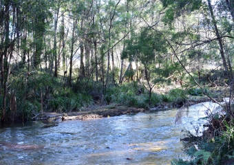 Vic-Trip_Cann-River_DSC_0255