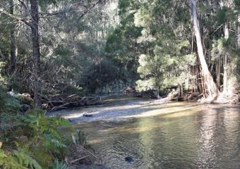 Vic-Trip_Cann-River_DSC_0259