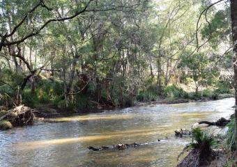 Vic-Trip_Cann-River_DSC_0263