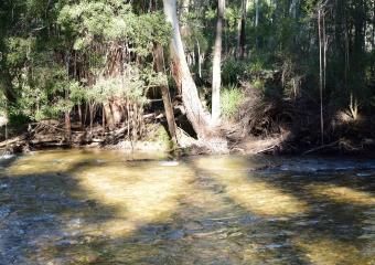 Vic-Trip_Cann-River_DSC_0272