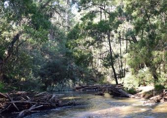 Vic-Trip_Cann-River_DSC_0275