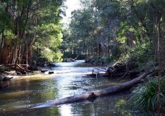 Vic-Trip_Cann-River_DSC_0308