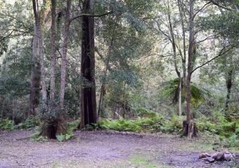 Vic-Trip_Combienbar-River-3-campsite_DSC_0827