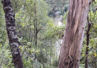 Vic-Trip_Combienbar-River-3-campsite_DSC_0830