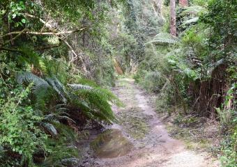 Vic-Trip_Combienbar-River-4-campsite_DSC_0553