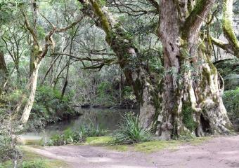 Vic-Trip_Combienbar-River-4-campsite_DSC_0554