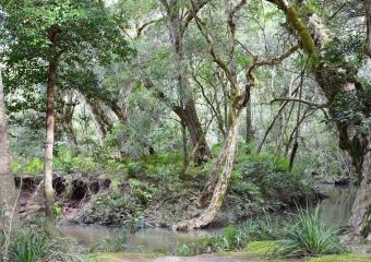 Vic-Trip_Combienbar-River-4-campsite_DSC_0565