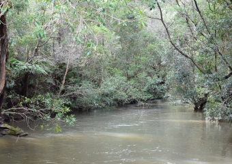 Vic-Trip_Combienbar-River_DSC_0506