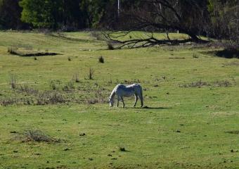 Vic-Trip_Combienbar-horses-DSC_0695