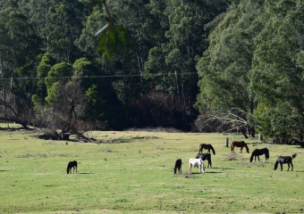Vic-Trip_Combienbar-horses-DSC_0697