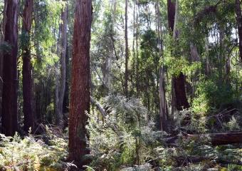 Vic-Trip_forest_DSC_0281