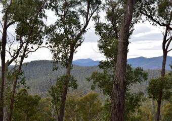 Vic-Trip_forest_DSC_0423
