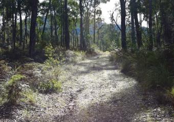 Vic-Trip_forest_DSC_0477
