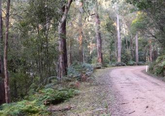 Vic-Trip_forest_DSC_0832