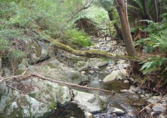 P1020613-creek-start