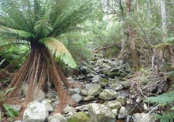 P1020660-creek-last-section
