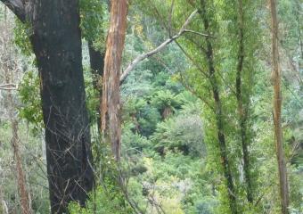 P1020689-ridge-top-view-to-treefern-on-side-of-next-ridge